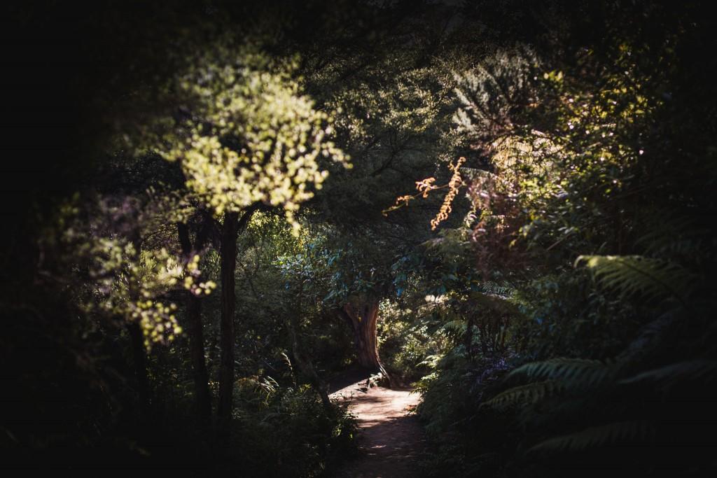 Abel Tasma Park-New Zealand-Collingwood-Sarah Galvan Photographe-2