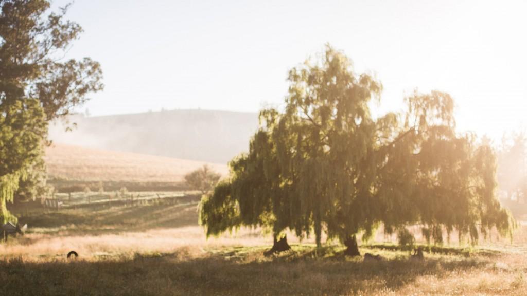 New Zealand-Milton-Pippa-Sarah Galvan Photographe-8-Sarah Galvan Photographe-2-3