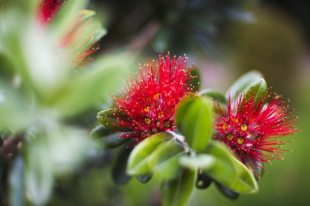 Arbre de Noel 2-New Zealand-Sarah Galvan Photographe