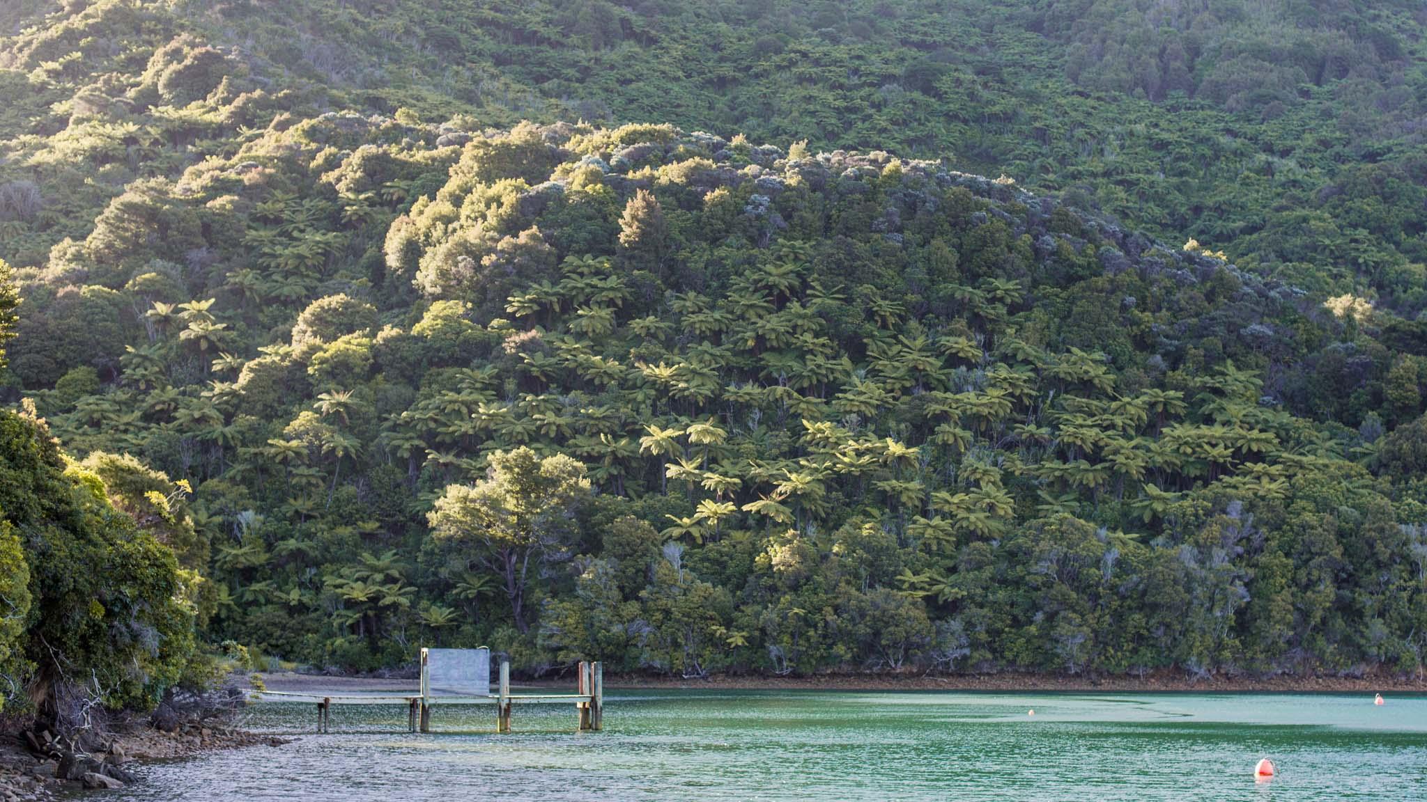 Nature sauvage- Malborough sounds-New Zealand-Sarah Galvan Photographe-2-4