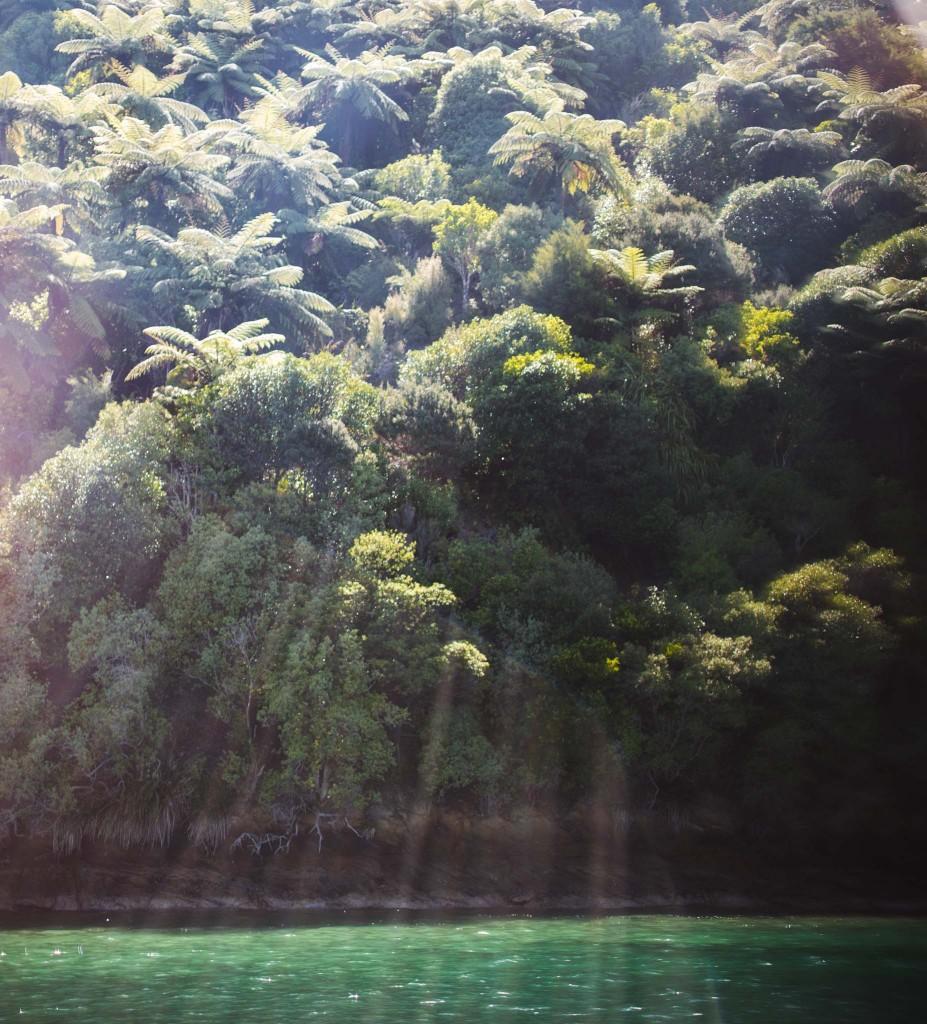 Marlborough Sounds- Belle lumière-New Zealand-Sarah Galvan Photographe
