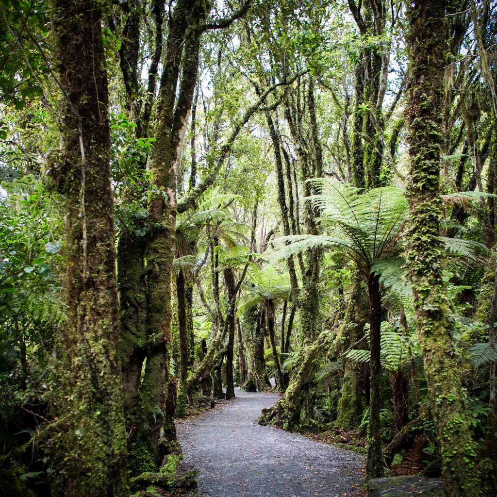 Chemin-New Zealand-Sarah Galvan Photographe