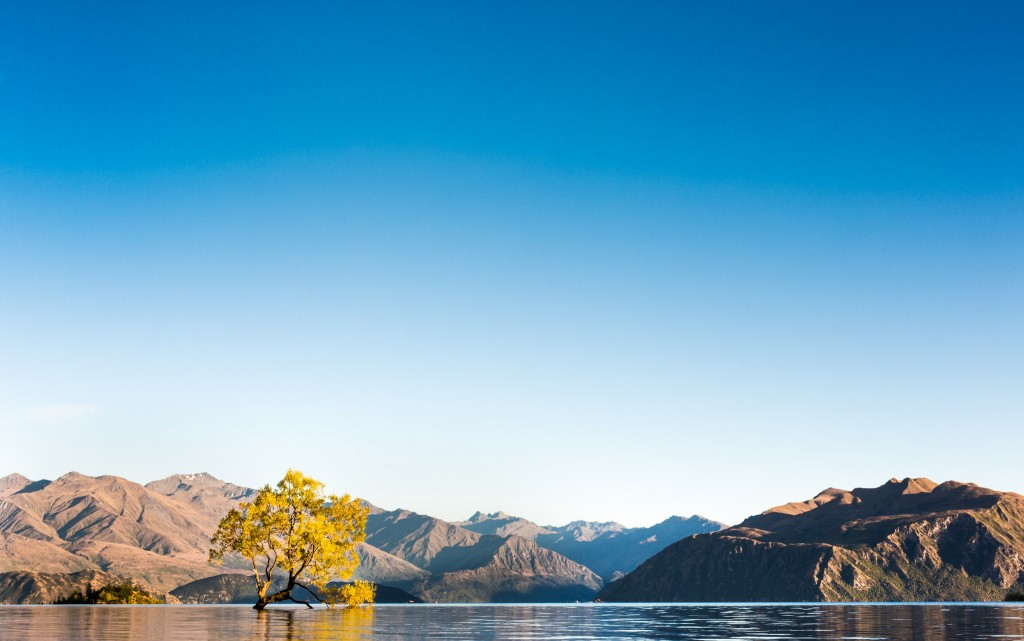 Arbre sur wanaka lake-New Zealand-wanaka-Sarah Galvan Photographe