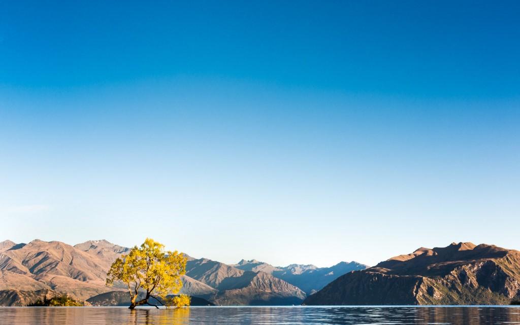 Arbre sur wanaka lake-New Zealand-wanaka-Sarah Galvan Photographe