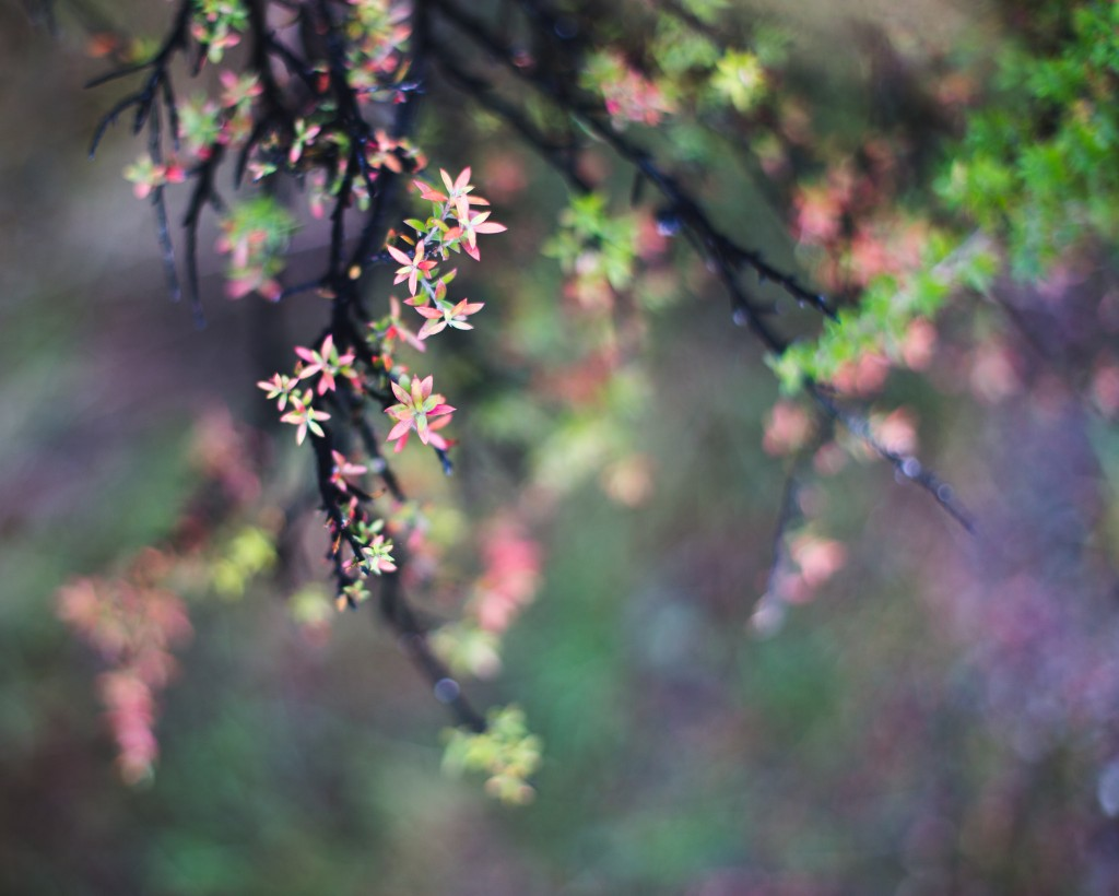 ColorNature-New Zealand-wanaka-Sarah Galvan Photographe