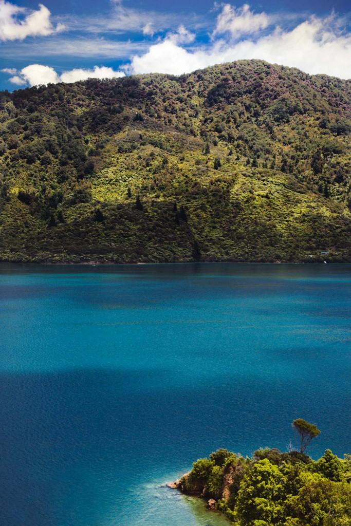 New Zealand-malborough sounds-Sarah Galvan Photographe-13