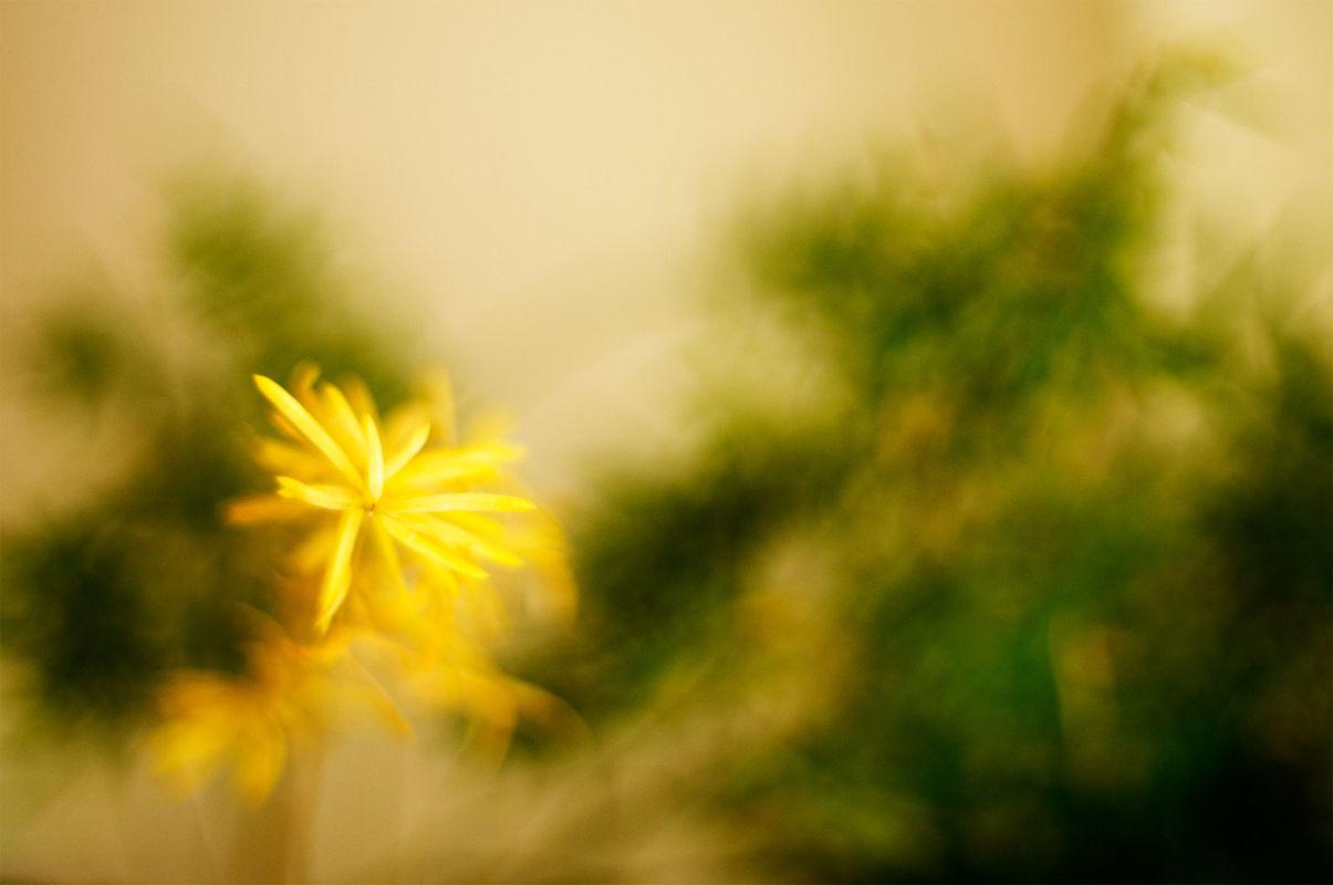 Color nature-Sarah Galvan photographe