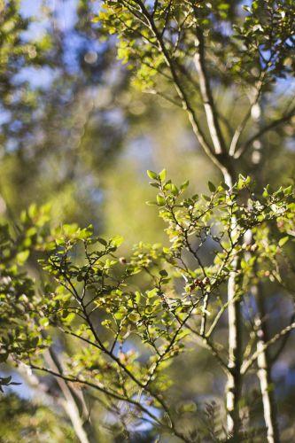Nature avec Pippa_SarahGalvanPhotographe-3