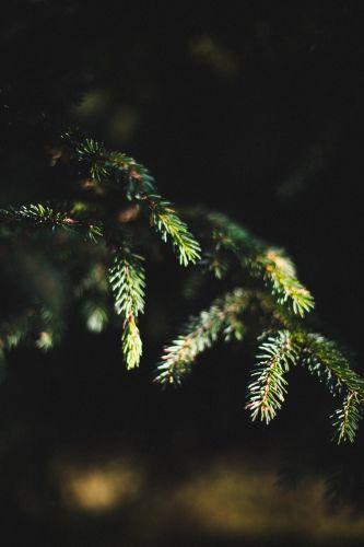 Nature avec Lika_SarahGalvanPhotographe-4